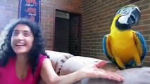 My Funny Parrot by remix-FUNNY Parrots Doing FUNNY Stuff ! Parrots Videos and Vines Compilation 2018