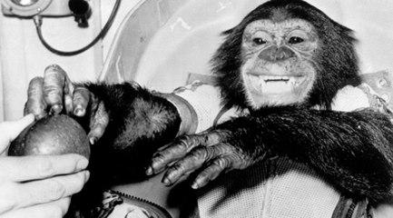 Uzaya giden ilk şempanze: Ham
