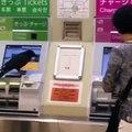 Un corbeau vole une carte bleue pour retirer de l'argent au distributeur