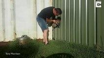 Il fait tout pour sauver ce kangourou coincé dans son portail mais c'est trop tard