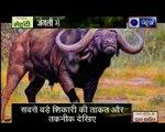 जंगल युद्ध: काली मौत से हुआ शेर का संग्राम