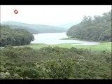 Texto base do novo Código Florestal é aprovado em Brasília