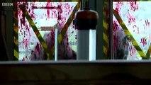 I Survived A Zombie Apocalypse S01e01