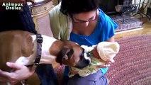 Chiens mignons bébés réunion pour la première fois Compilation new [NOUVELLE EDITION]