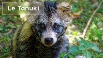 10 animaux japonais