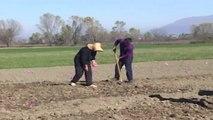 Peleshi: 4600 fermerë ne te gjithe vendin fitojne nga financimet e vendit