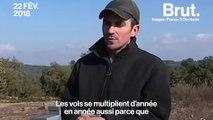 Les vols de ruches en augmentation en France