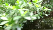 Relentless Hunters: The Crocodile and the Manjuari | Wild Animals - Planet Doc Full Documentaries