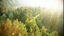 中井川正男 stock-footage-aerial-view-flying-over-the-beautiful-sunny-forest-trees-aerial-camera-shot-landscape-panorama