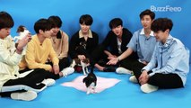 07 [180518] BTS Plays With Puppies While Answering Fan Questions