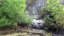 Antalya'daki orman yangınında 2 hektar kül oldu