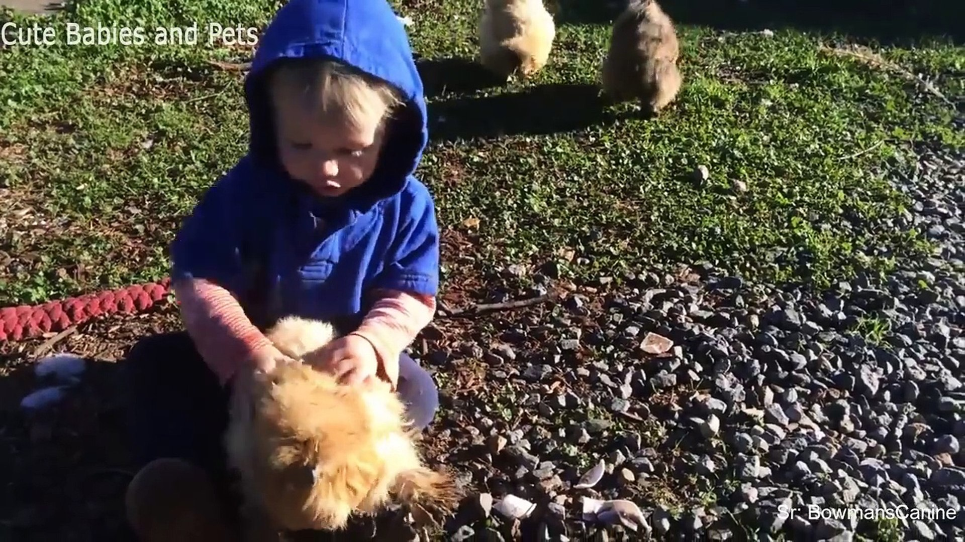 Funny Babies Cuddling Animals - Cute Babies and Pets Compilation