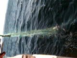 pêche poissons