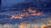 Denizli'de anız yangını ormana sıçradı... Ekiplerin müdahalesi sürüyor