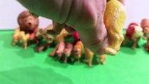 Toy Lions, Tigers, Mountain Lions, & Pumas - Toy Zoo Animals Collection - Leones y Tigres de Juguete
