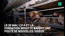 Loi alimentation: le vice-président de la FNSEA et le porte-parole de la Confédération paysanne répondent aux critiques faites aux éleveurs sur la souffrance animale