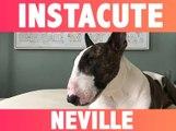 INSTACUTE : Neville le chien : Son maître Marc Jacobs en est complètement gaga !
