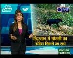 मोगली के दोस्त बघीरा के मिलने का सच | Viral Vishesh