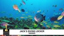 Readers Choice 2018 - Jacks Diving Locker