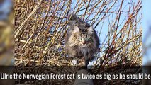 9 Of The Worlds Biggest Pets