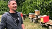 Surmortalité des abeilles : un apiculteur témoigne