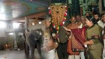 சமயபுரத்தில் பாகனை கொன்ற யானை  ஜெயலலிதா பரிசளித்ததாம்