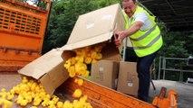 Saint-Uze : une course de canards en plastique pour la bonne cause