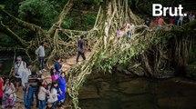 Inde : les ponts vivants du peuple Khasi