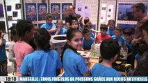Le 18:18 - Marseille : le pari des récifs artificiels est gagné! Les poissons sont de retour