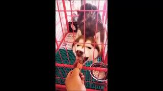 Tik tok pet Funny pet Khi thú cưng cũng chơi