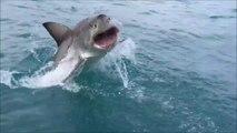 Tiburón salta fuera del agua a pocos metros de unos turistas