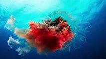 PLANETA AZUL 2 - EP. 4 : A Imensidão Azul