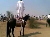 Amazing skill of horse riding | Horse riding at his best