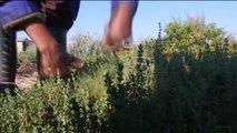 Afrique du sud, DÉVELOPPEMENT DE L'AGRICULTURE BIOLOGIQUE