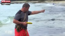The Island Célébrités : Les candidats frôlent le drame après avoir pêché un poisson mortel (vidéo)