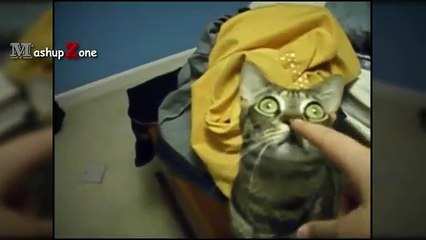 Cats Staring Compilation - Funny Cat Videos 2017
