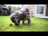 Abandoned dog so mistreated she has eyes removed