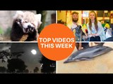 Here is a selection of our top videos this week