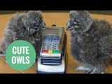 Adorable baby owls are a hoot after getting jobs