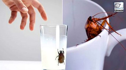 People Are Drinking Cockroach Milk & It Tastes The Same As Cows Milk