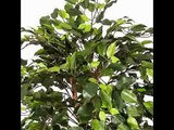 [- Homescapes 4 Feet Green Ficus Tree With Real Wood Stems and Lifelike Leaves Replica Artificial P