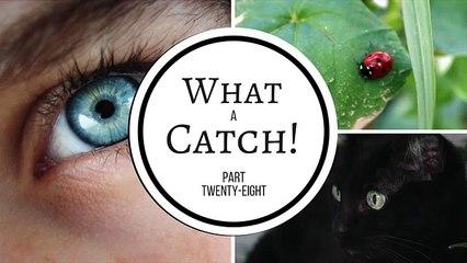 What a Catch! - Part 28 (A Miraculous Ladybug Fanfiction)