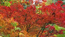 4K Nature Relax Footage - URBAN AUTUMN- Relaxing colorful autumn views and piano sounds-TRAILER 36