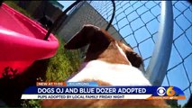 `Wonderful` Family Adopts Famous Blind Dog, Seeing Eye Dog Buddies After Failed First Adoption