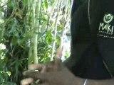 Vanille, Pollinisation