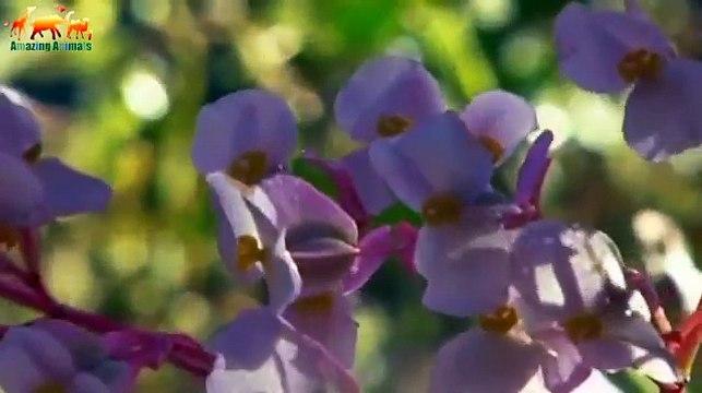 WILD ISLAND. CARIBBEAN - Tropical paradise - Documentary Films 2018 on Amazing Animals TV