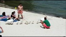 La famille cygne se met à l'eau sur la plage de Saint-Jorioz