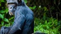 10 espèces qu'on ne pense pas menacées mais qui le sont !