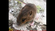 Sonic pest remover - Ultrasonic rodent repellent - 30 minutes