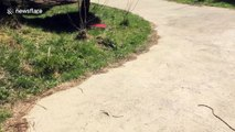 'We thought this was a snake. But it turned out to be something even scarier'